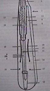kemençe, Pontic lyra parts