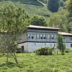 Traditional Pontic house and tea plantation of Rize  Photo: © Copyright Özhan Öztürk
