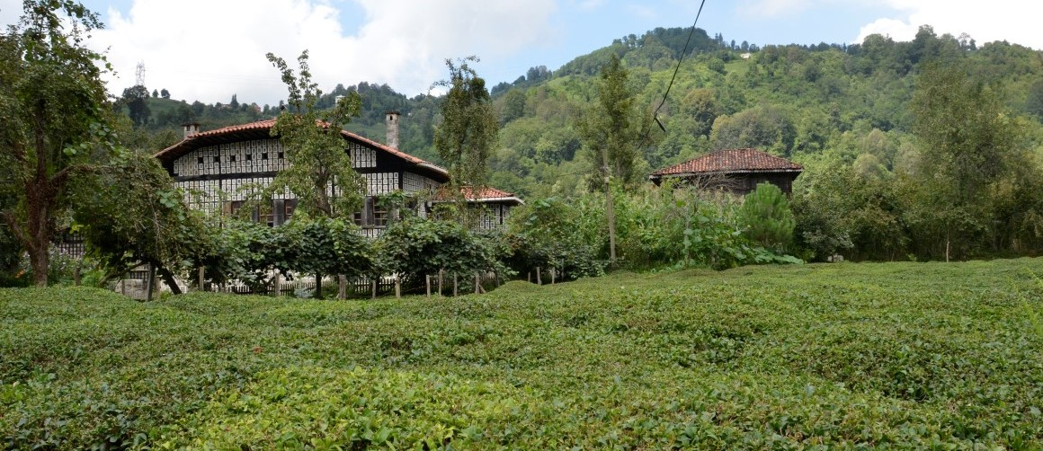 laz haouse and tea plantation from Fındıklı Rize Turkey Photo: © Copyright Özhan Öztürk
